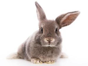 lavera е против тестовете върху животни