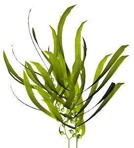 био водорасли