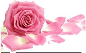 Rose-Frei