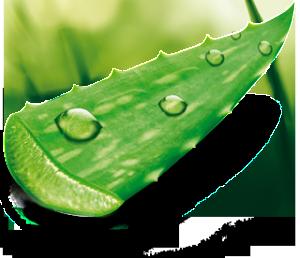 Aloe-Vera-Frei