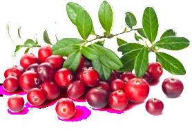 Cranberry-Frei
