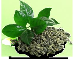 Gruener-Tee-Frei