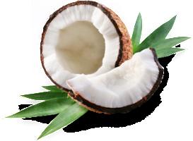 Kokos-Frei