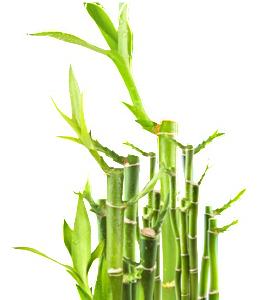 био бамбук