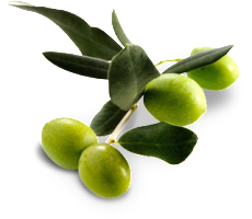 Oliven-Frei