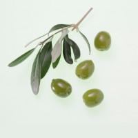lavera-organic-olive-oil-8703e