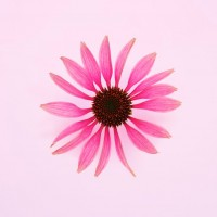 lavera-organic-echinacea-0aa02