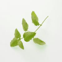 lavera-organic-lemon-balm-61196