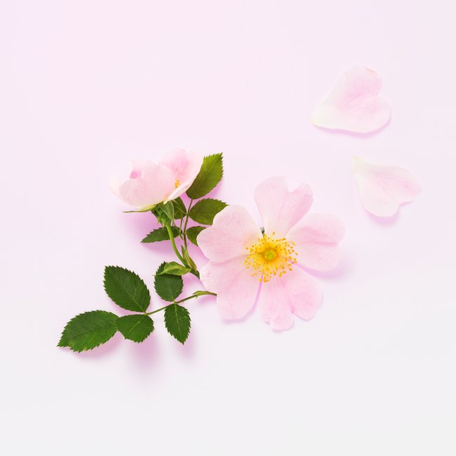 lavera-organic-wild-rose-b5700