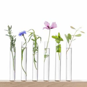 pflanzen-in-reagenzglaesern-in-halterung-a7eb5