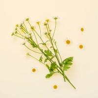 lavera-organic-chamomile-48d08